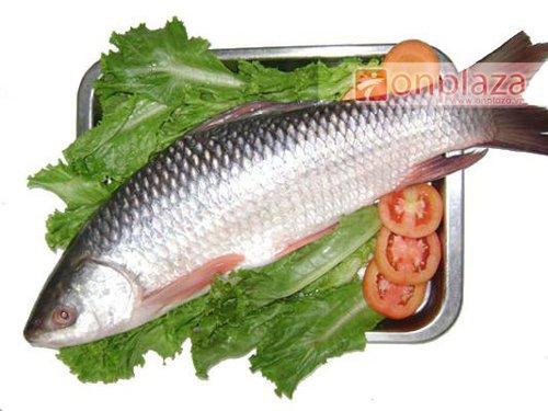 Đông trùng hạ thảo với cá