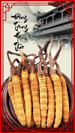 Giới thiệu sản phẩm đông trùng hạ thảo