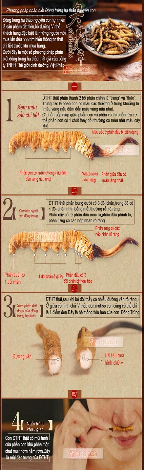 Một số đặc điểm của đông trùng hạ thảo thật