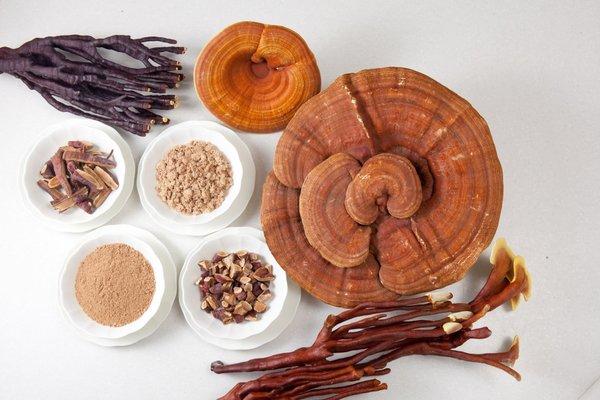 Công dụng điều hòa huyết áp của nấm linh chi 2