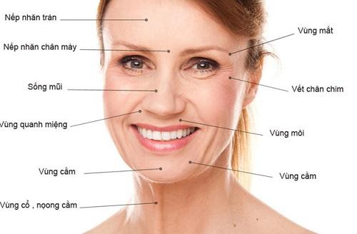 Đông trùng hạ thảo giúp giảm nguy cơ lão hóa da cho phụ nữ