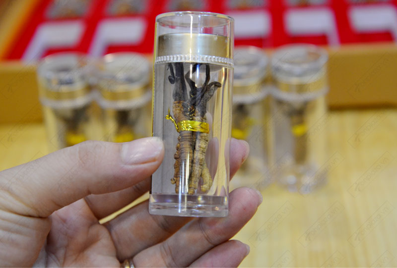Đông trùng hạ thảo nguyên con cao cấp thượng hạng loại 20g/hộp ( hộp 12 ống)  D054 7