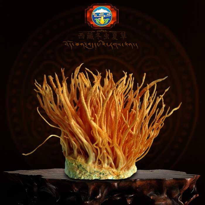 Đông trùng hạ thảo tươi Việt Nam lọ 100g