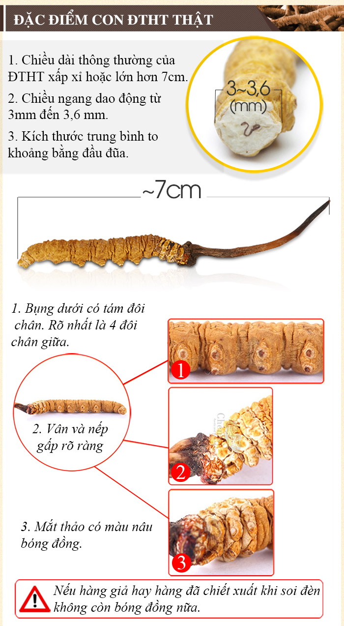 Đông trùng hạ thảo loại thường 10g D002 7